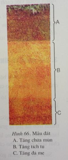 Giải bài tập Địa lý lớp 6 Bài 26: Đất. Các nhân tố hình thành đất