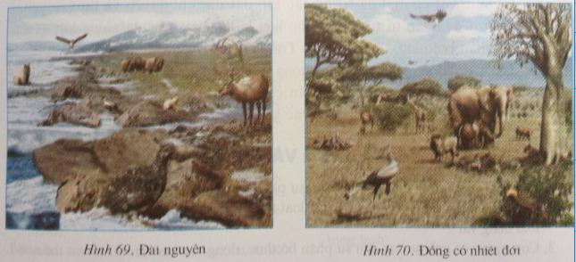 Giải bài tập Địa lý lớp 6 Bài 27: Lớp vỏ sinh vật. Các nhân tố ảnh hưởng đến sự phân bố thực, động vật trên Trái Đất